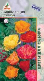 Цветок эшшольция описание